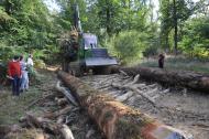 Pour une exploitation forestière  plus respectueuse de l'environnement