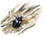 Début des inventaires sur le site Natura 2000 Bocage de la forêt de la Monnaie à Javron-les-Chapelles