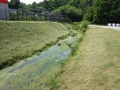 Périodes de fortes chaleurs : l'équilibre naturel des cours d'eau perturbé