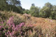 Des inventaires en cours sur les sites Natura 2000