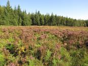 Du nouveau pour le site Natura 2000 d'Ecouves