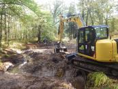 Un ruisseau « pépinière » restauré en forêt d'Andaine