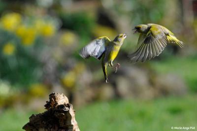 Mélodie d'un oiseau perché