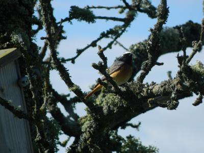 Maîtres chanteurs sur leurs arbres haut perchés…