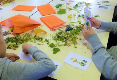 P'tits z'ateliers - Cartes postales végétales